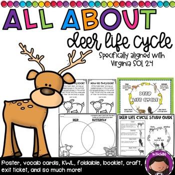 Deer Life Cycle SOL 2.4