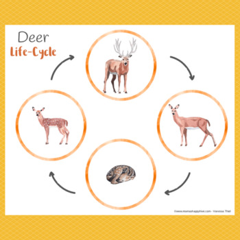 Deer Life-Cycle with Spinner & Montessori 3-Part Cards