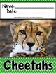 Cheetahs {Nonfiction Animal Research Report}
