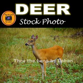 Deer Stock Photo #150