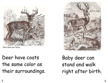 Deer- a non-fiction guided reading book