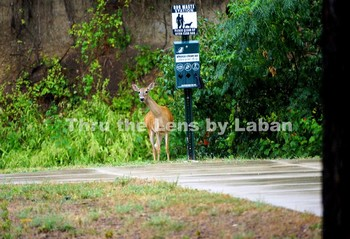 Deer and Dog Walking Station Stock Photo #201