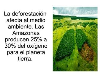 Deforestación y extinción de animales PPT
