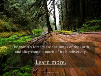 Deforestation: Webquest with Worksheet