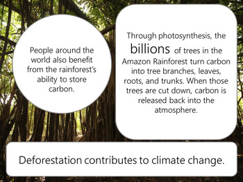 Deforestation and the Amazon Rainforest