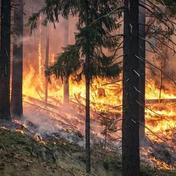Deforestation lesson Professor Prestome Ungyobrock