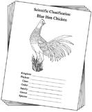 Delaware State Bird Notebooking Set (Blue Hen Chicken)