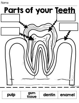 Dental Health All About Teeth