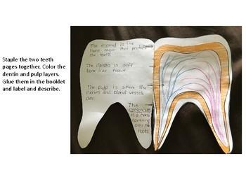 Dental Health for Third Grade