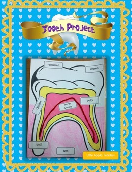 Dental Health - Labeling Parts of a Tooth