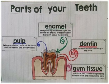 Dental Health Parts of Your Teeth Anchor Chart