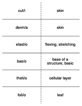 Dermatology Combining Forms Flash Cards