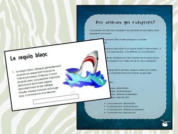 Des animaux qui s'adaptent (faucon pèlerin, requin blanc) (Sciences)