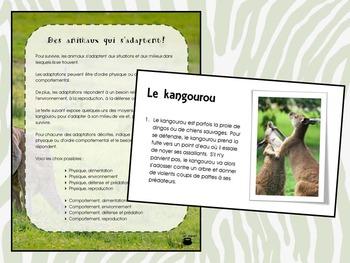 Des animaux qui s'adaptent (kangourou, manchot empereur) (