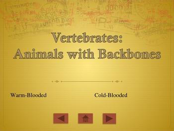 Describing Animals PowerPoint