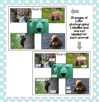 Describing Animals with Tree Maps: An ESL Writing Activity