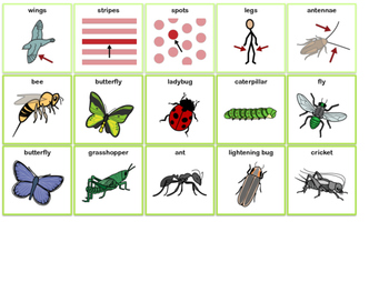 Describing Sentence Strip- Insects