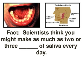 Describing the Digestive System PowerPoint