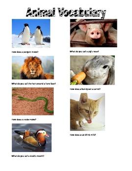 Descriptive Animal Vocabulary