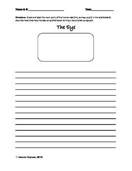 Descriptive Paragraph Writing: The Human Eye