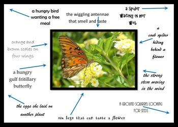 Descriptive Writing:  Butterflies, Birds, Bees and more