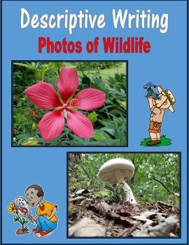 Descriptive Writing (Photos of Wildlife)