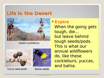 Desert Adaptations PowerPoint