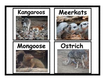 Desert Animal Flashcards