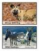Desert Animal Posters