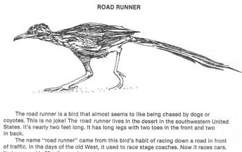 Animal of the Desert ROAD RUNNER w/ 4 Multiple Choice Reading Comprehension Qs