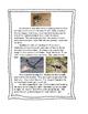 Desert Animal: Roadrunner Kit updated