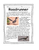 Desert Animal: Roadrunner Kit updated