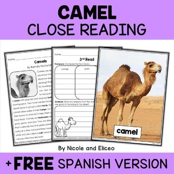 Close Reading Passages - Desert Animal Activities