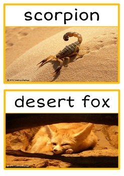 Desert Animals Photo Set