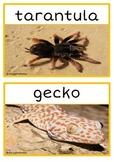 Desert Animals Photo Set