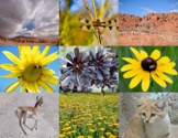 Desert Animals, Plants, and Land Formations for Commercial Use.