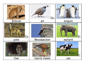 Desert Animals Vs. Non Desert