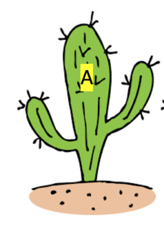 Desert / Cactus upper and lower case letter matching