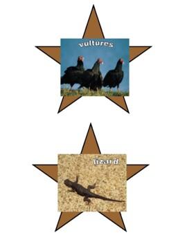Desert Habitat Pictures