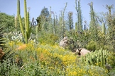 Desert Habitat Pictures with Plants and Animals for Commer