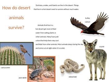 Desert Habitat Power Point