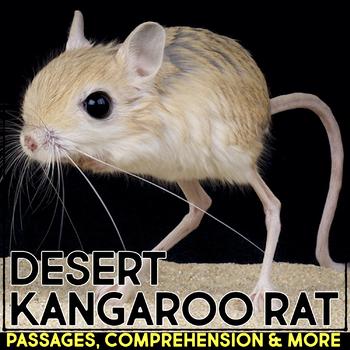Desert Kangaroo Rat: Informational Article, QR Code Resear