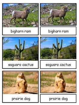 Desert Montessori 3-part cards--Safari LTD Desert Toob