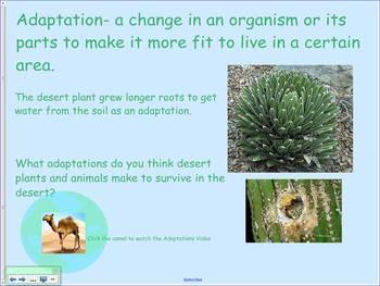 Desert Plant and Animal Adaptations