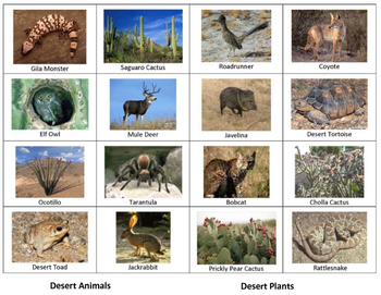 Desert Plant and Animal Sorting
