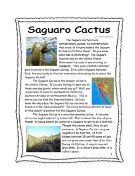 Desert Plants: Saguaro Cactus