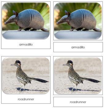 Desert Safari Toob Cards - Montessori
