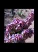 Desert Spring Wildflower Photograph Collection