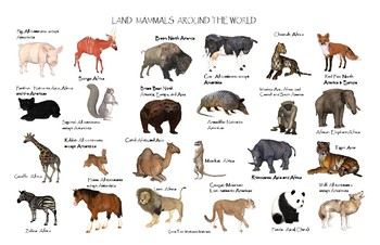 "Land Mammals Around the World Poster:  ""Ledger/Tabloid"" (11 x 17 inches)"