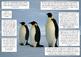 Desert and Arctic Animal Adaptation Printables